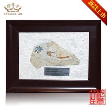 济赞堂古生物鱼化石