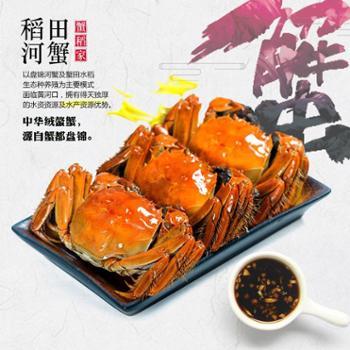 蟹稻家冷水大闸蟹盘锦河蟹15只(纯母)2.0-2.3两新疆西藏青海不发货