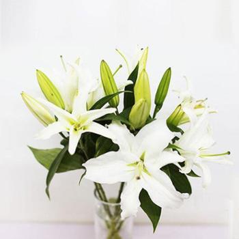 【扶贫鲜花】臻享百合|颜色随机丨赠送花瓶丨单品5支
