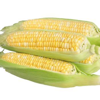 食果源 水果玉米 5斤