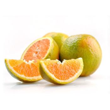 一苇农佳湖北省秭归脐橙泄滩夏橙9斤装精品果(70-80MM)