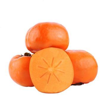 鲜果果 阳丰脆甜柿子 统果5斤装