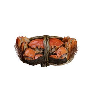 八将军大闸蟹10只装母蟹:2.0-2.5两